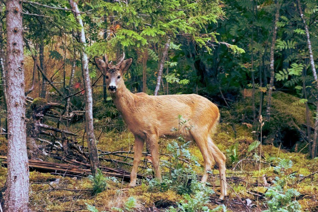 5 Reasons Everyone Should Learn to Bushcraft- Wildlife Neighbors